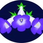 speciosa logo bkgrnd