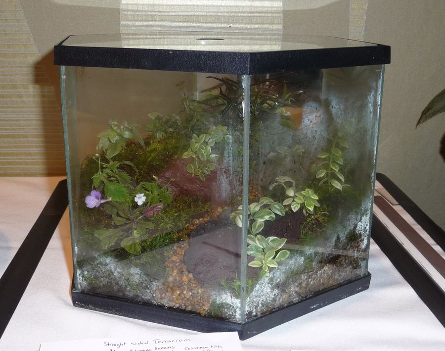 2014 Convention - Class 64 Terrarium – Straight-sided - Runner-Up to Best in Artistic