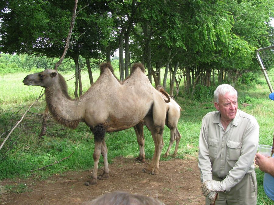Don and a couple of two-hump camels, part of his rare animal collection