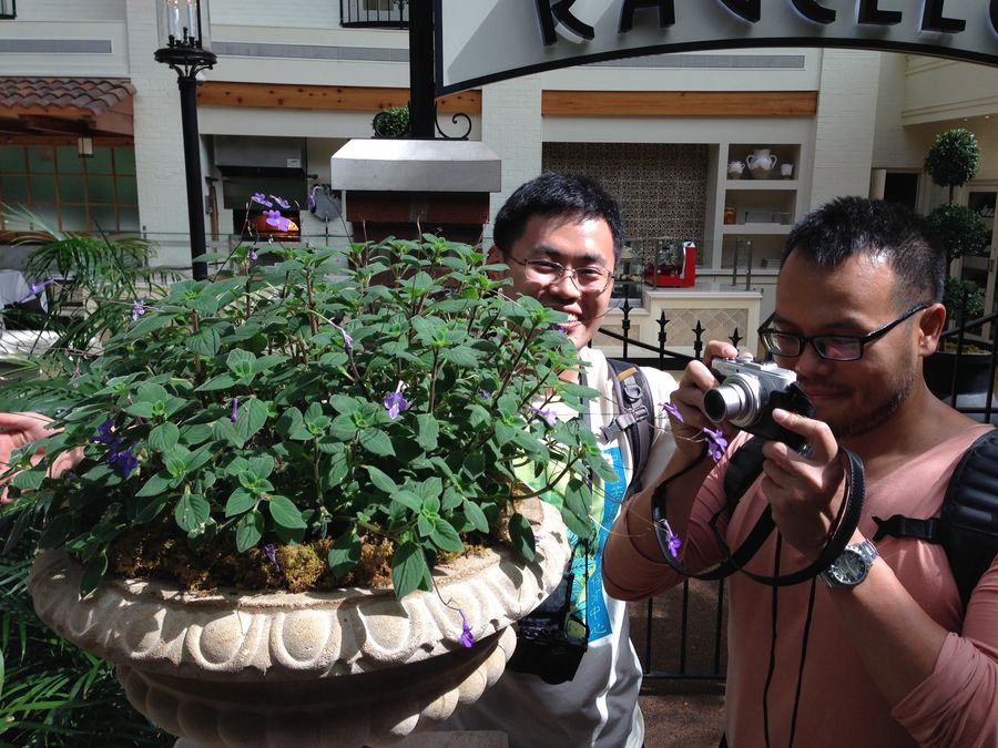 Hong Xin and Wen Fang photographing streptocarpella