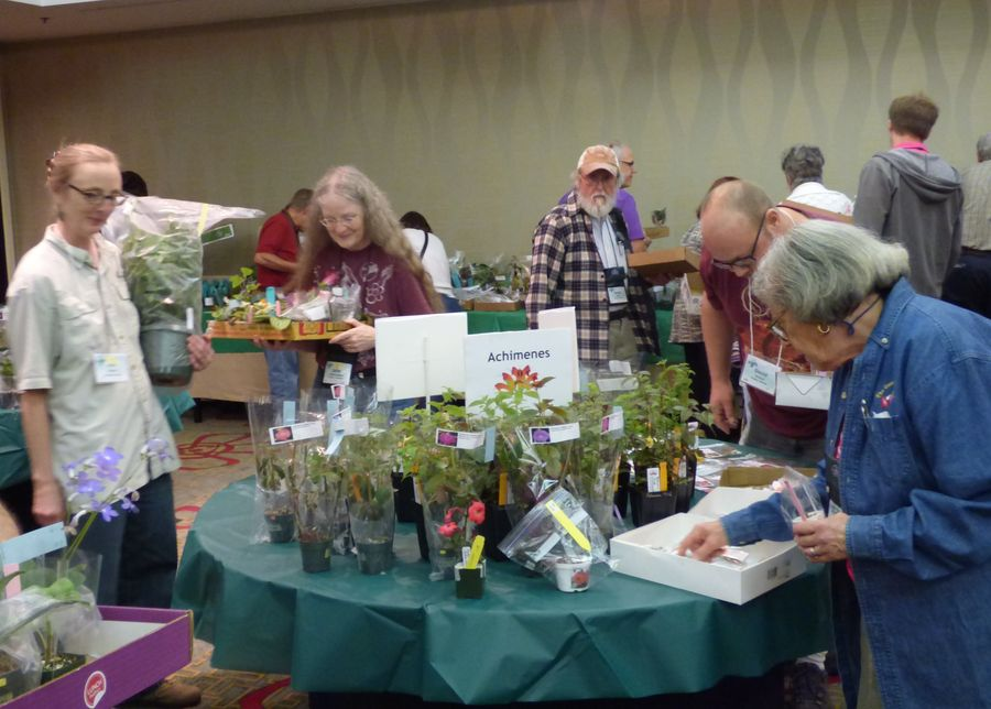 Making selections from the many plants for sale