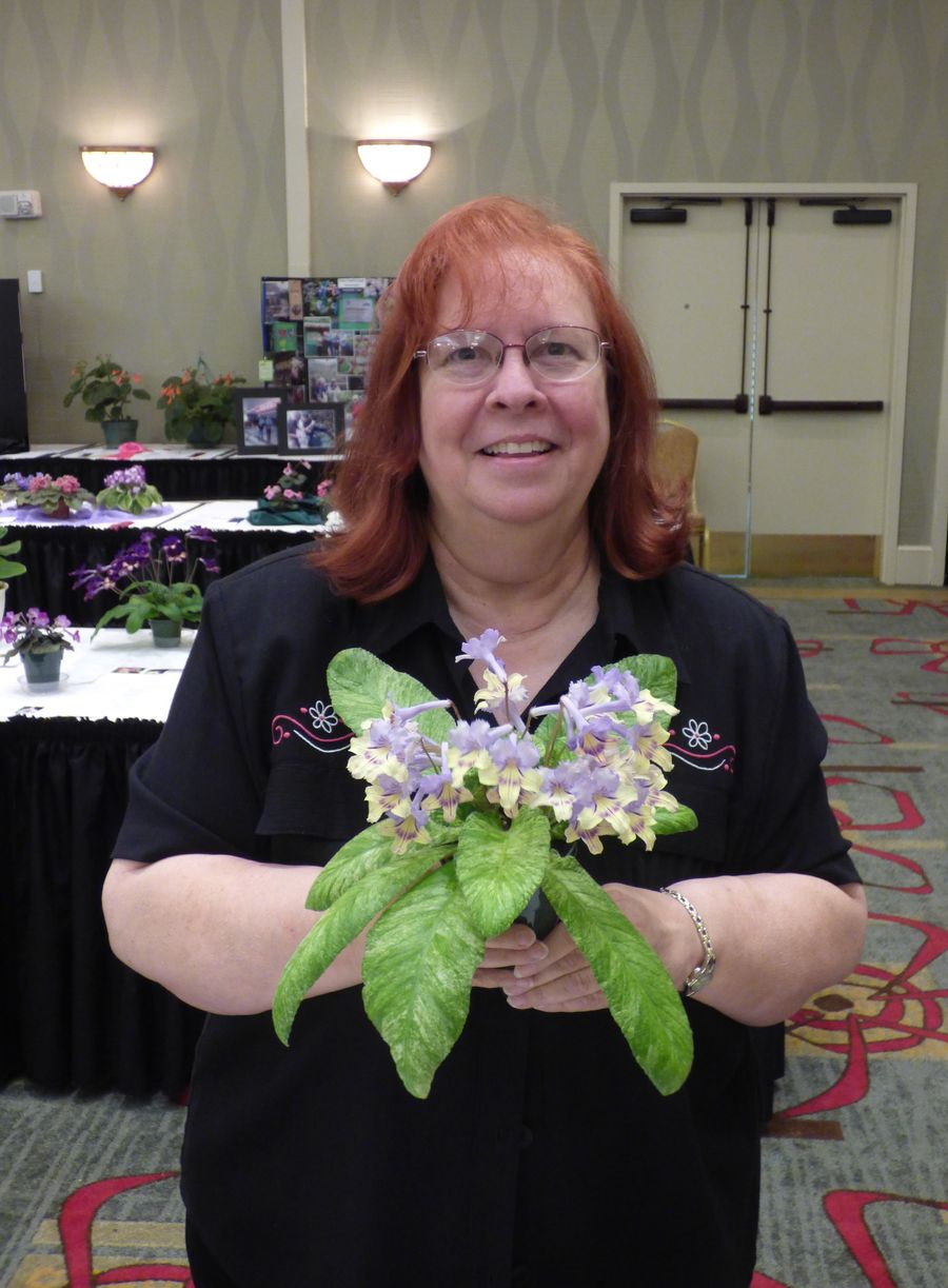 Dale with her Best in Show plant of <i>Streptocarpus</i> 'Dale's Polar Canary'