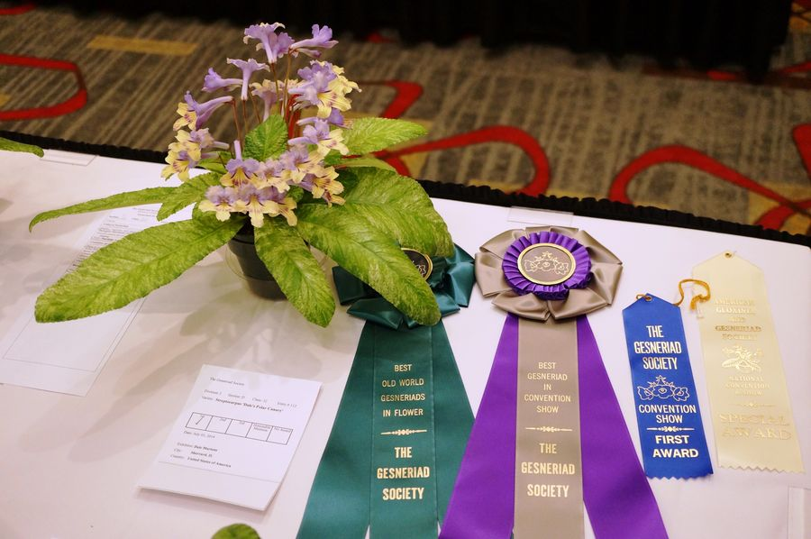 Ribbons and rosettes for the award-winning entry