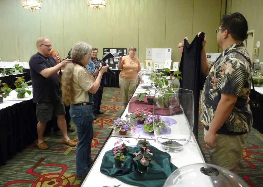 Official flower show photo team led by Julie Mavity-Hudson