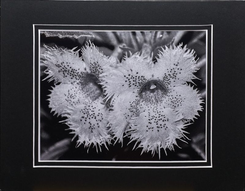 2015 Convention – Photography - Class 71 Monochrome print <br>BEST IN SECTION P <br>RUNNER-UP TO BEST IN ARTS