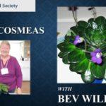 Beverley_Williams_-_PETROCOSMEA_1024x1024