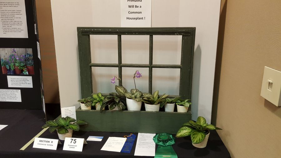 2016 Convention<br>Commercial Displays <br>Class 76 Display table with a grouping of gesneriads (fewer than 10 plants)<br>BEST IN SECTION R – COMMERCIAL