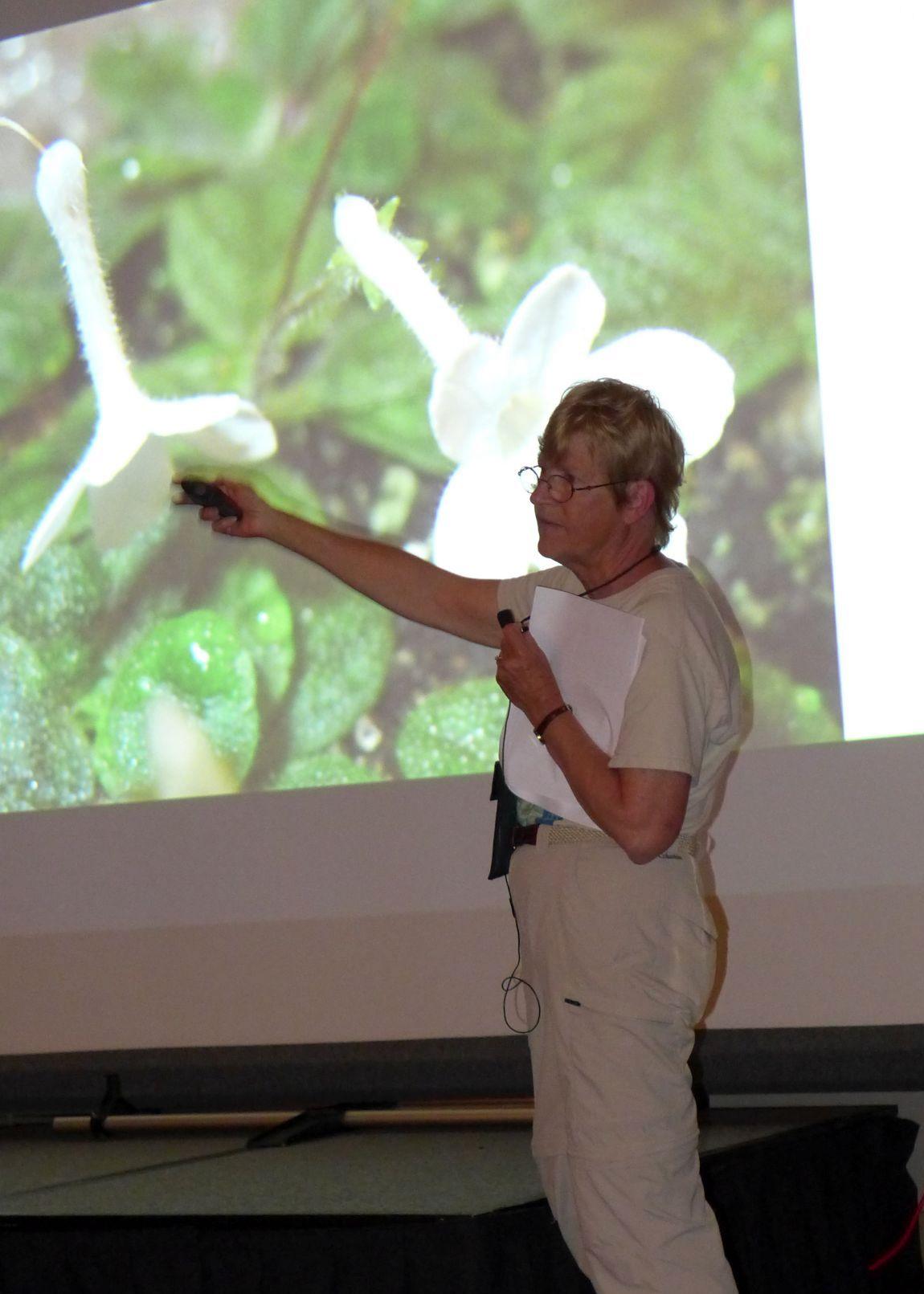 Betsy Gottshall discusses miniature sinningias