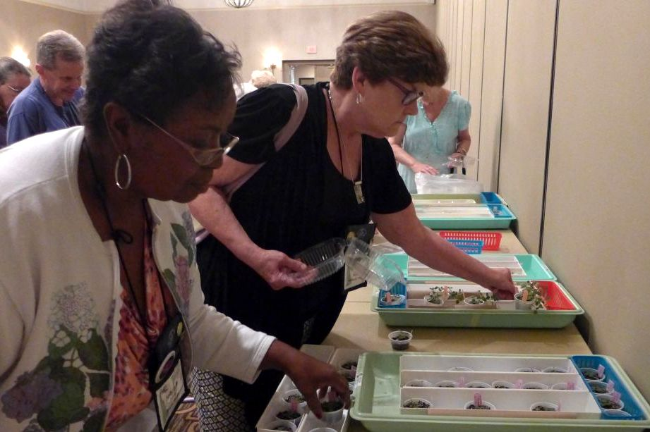 Johnnie Berry and Barb Borleske peruse the mini-sinningia offerings