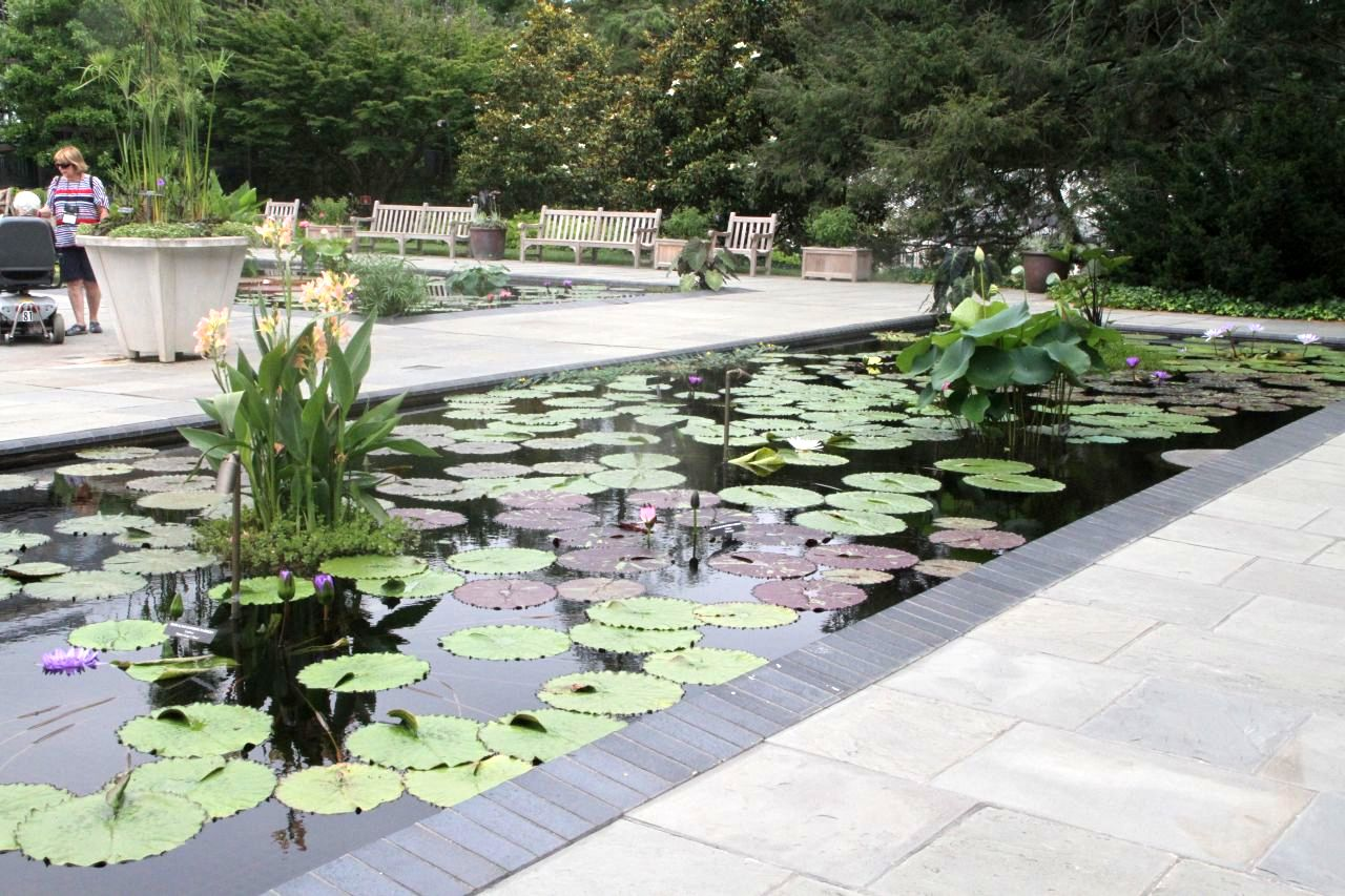 The Water Lily Garden