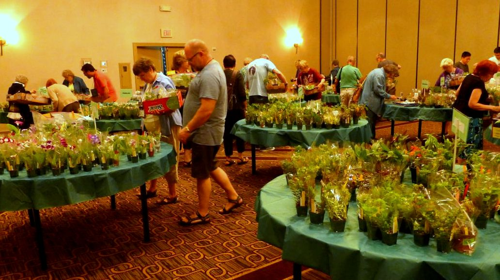 The plant sales room