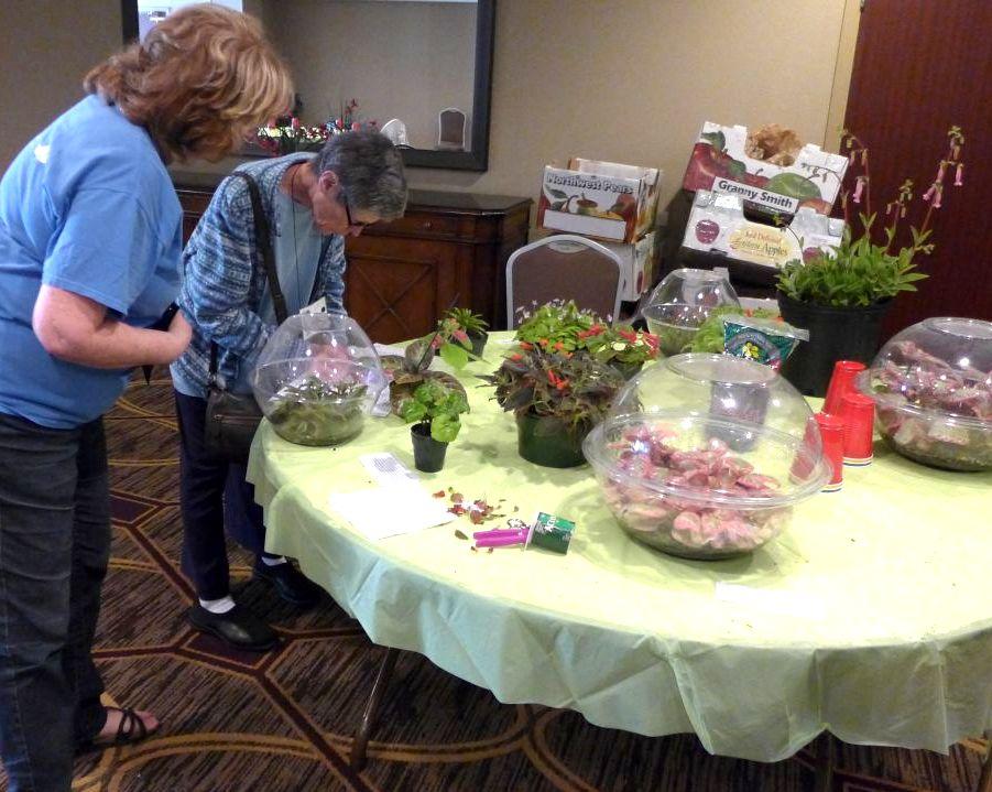Judy Becker inspects Mary Schaeffer's plants