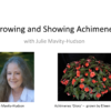 Anytime Webinar: Growing and Showing Achimenes with Julie Mavity-Hudson