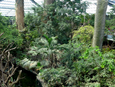 The rainforest habitat