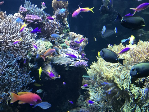 The colorful fish habitat
