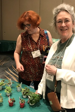Lisa Flaum and Catherine Cornett back in the plant sales room