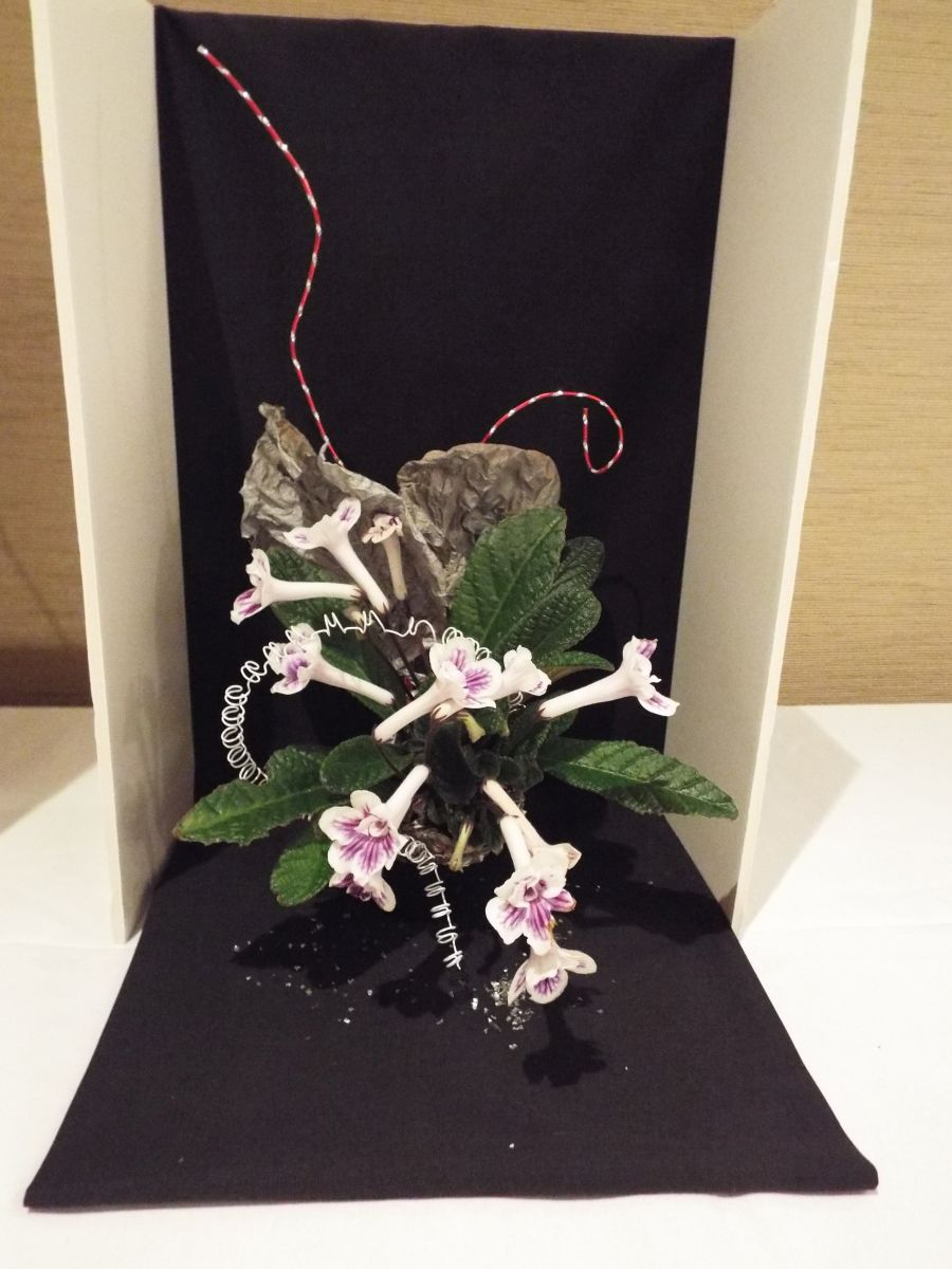 2018 Convention<br>Arrangements of Dried and/or Growing Gesneriad Material<br>Class 61<br>BEST IN THE ARTISTIC DIVISION