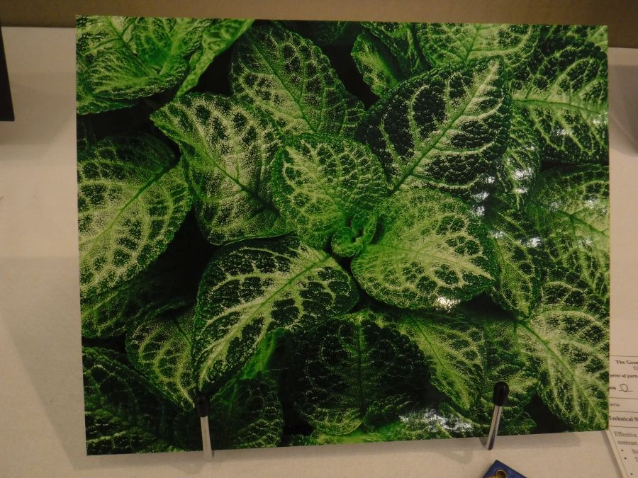 2018 Convention<br>Photography<br>Class 69 Color print of parts of a gesneriad (flowers, fruit, foliage, etc.) <br>BEST IN THE ARTS DIVISION<br>BEST IN SECTION O – PHOTOGRAPHY