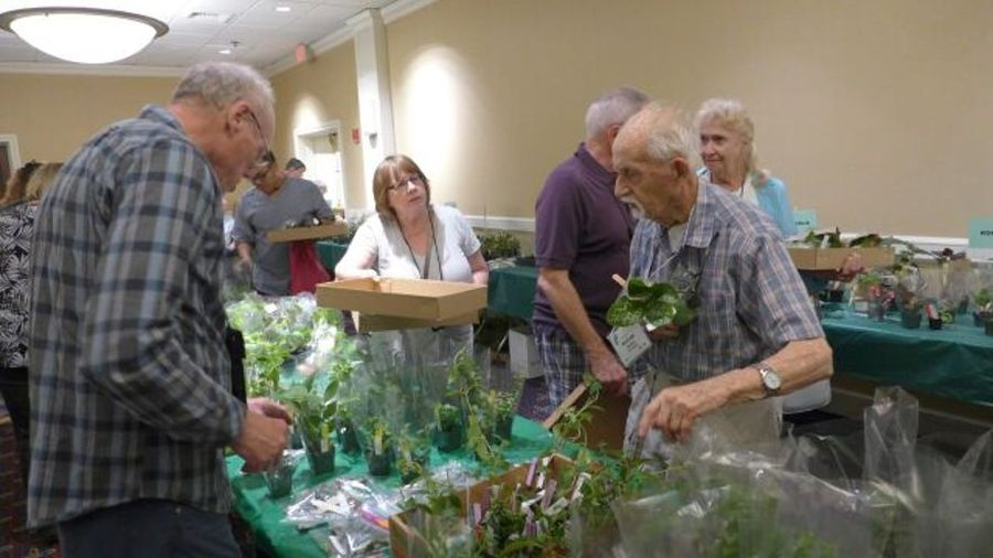 Making selections at the plant sale