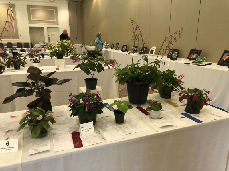 The flower show