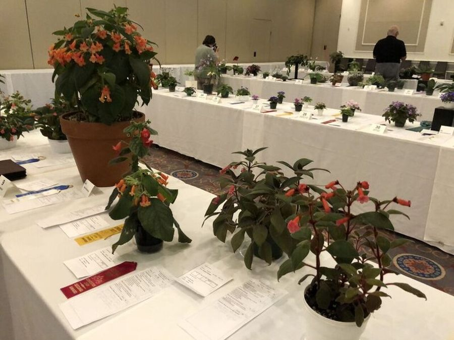 Last opportunity to admire the flower show entries