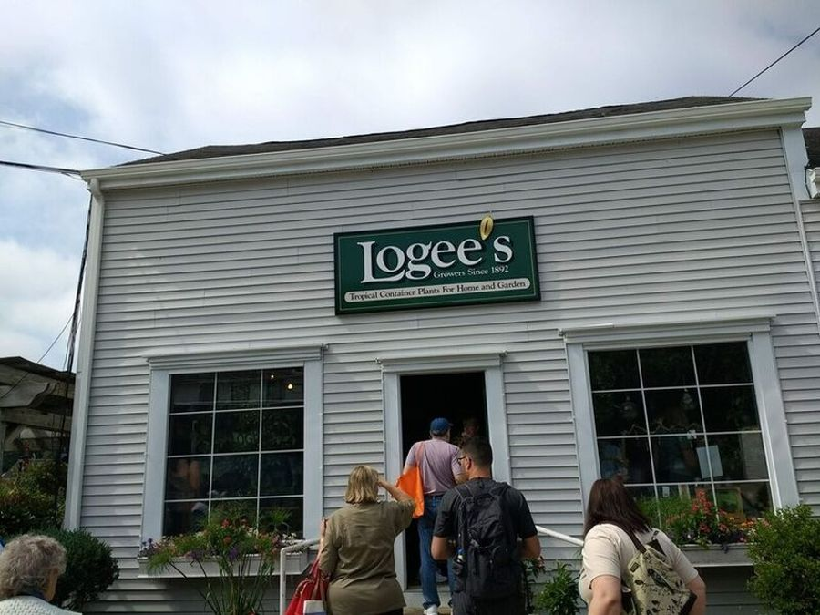Arrival at Logee's in Connecticut