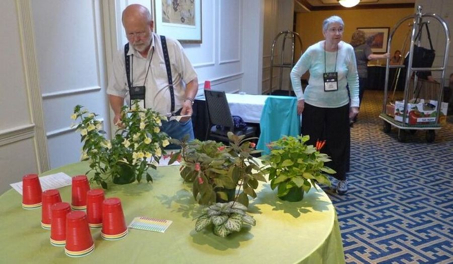 Ron Myhr grooms his entries